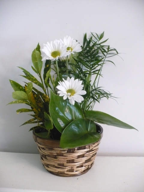 Daisy and Plant Basket